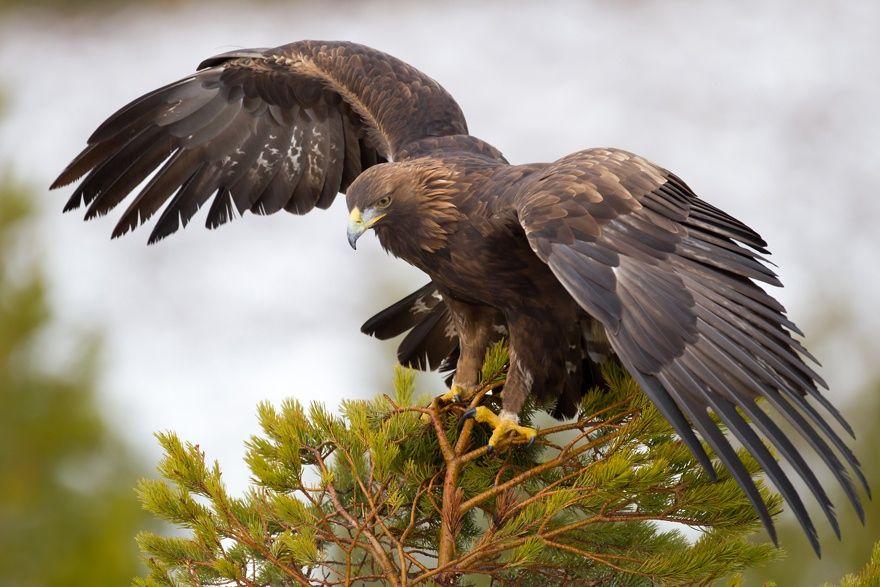 Лесные птицы фото названия зависит