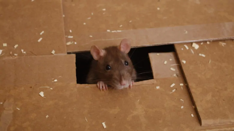 Glue traps are heinously cruel. Retailers should be banned