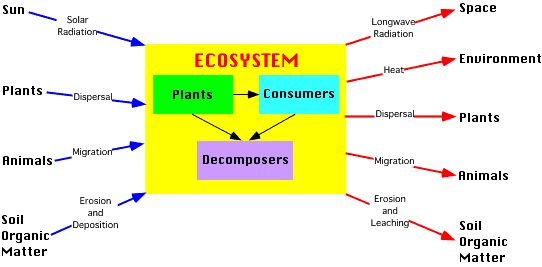 different types of ecosystems ECOSYSTEM Pinterest Biomes