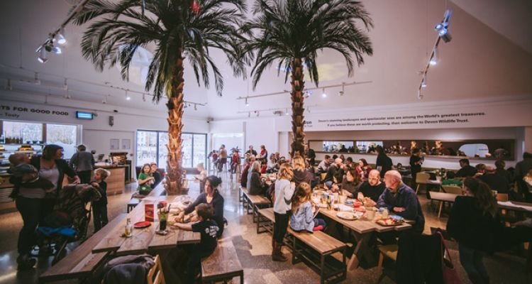 seaton jurassic, interior design, graphic design, illustration, birds, pre-historic, cafe, restaurant, table, interpretation, signage, map, jurassic coast, texture