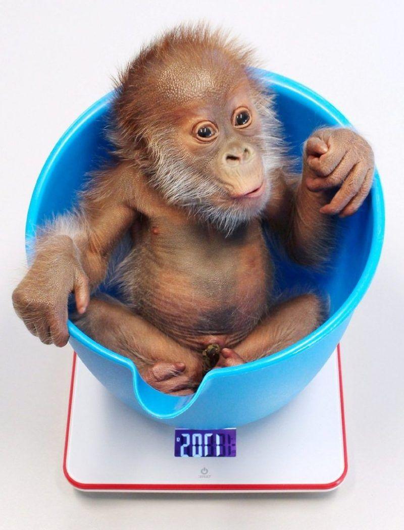 Affe Als Haustier Eine Gute Idee Deko Feiern Pinterest