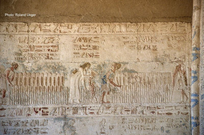 Ancient Egyptian Clothing - Harvest scene from the tomb of Petosiris, Tuna el-Gebel, Egypt. Photo by: Roland Unger