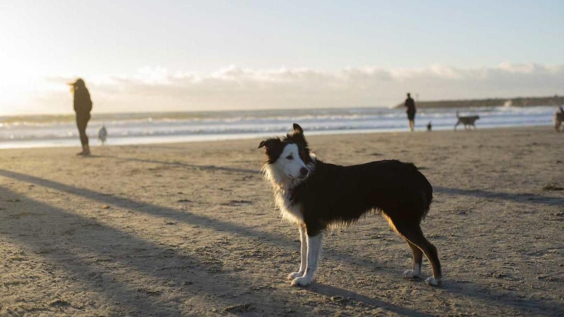 Dog Friendly San Diego Where To Eat Stay And Play With Your Pet In 2020 San Diego Dog Friendly Dog Friendly Vacation Dog Friendly Beach