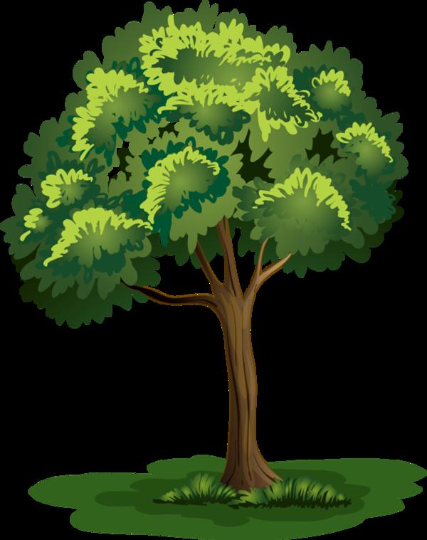 arbre png trees pinterest moyenne plantes et dessin. Black Bedroom Furniture Sets. Home Design Ideas