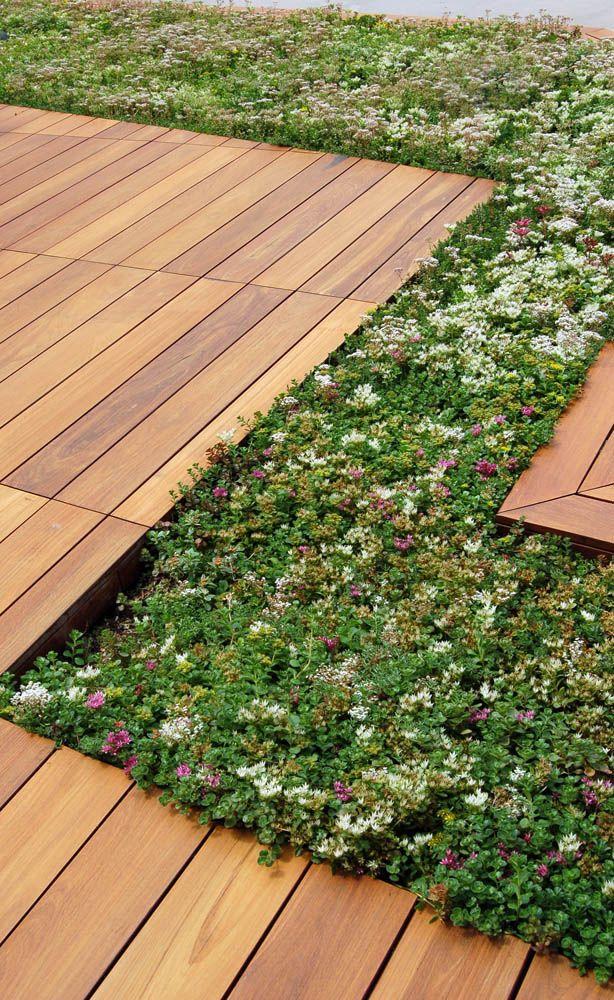 Ipe Deck And Sedum Liveroof Trays At The International