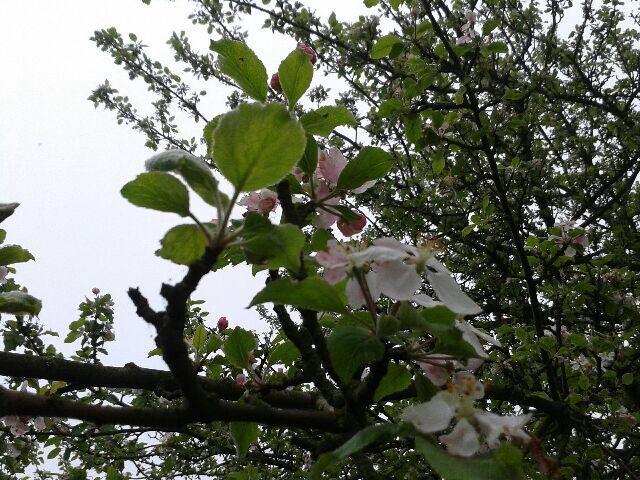 Flower hiding up High ..
