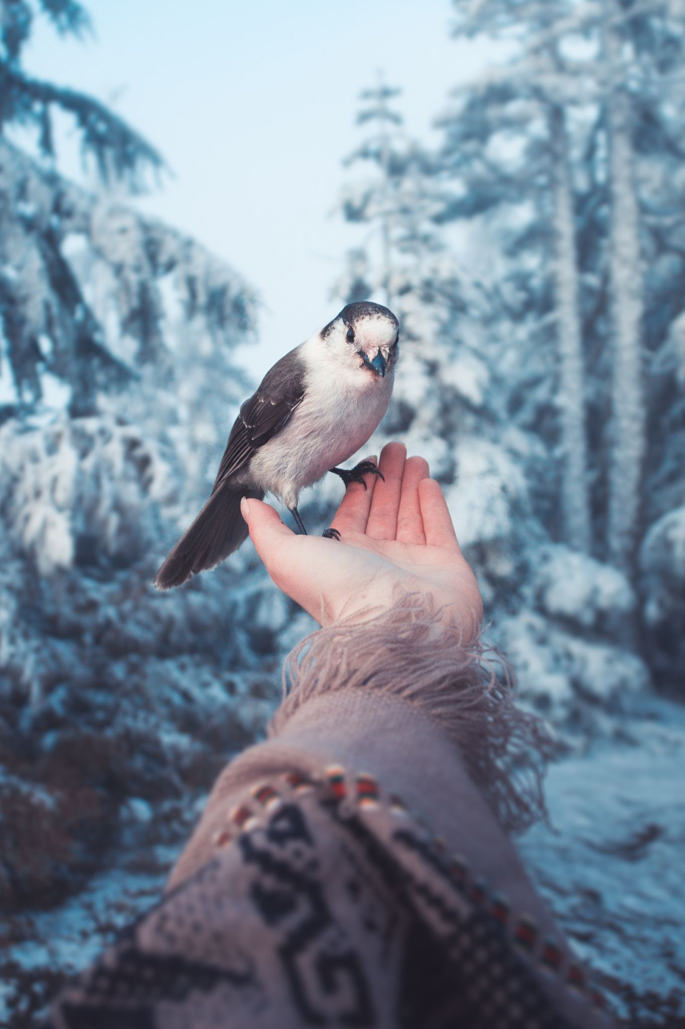 Sweet Little Soul By Lizzy Gadd Httpspxcomphoto - Awe inspiring landscape photography elizabeth gadd