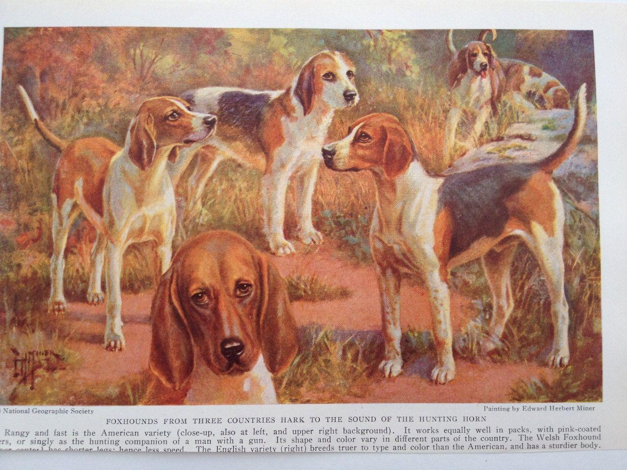 English Print Fox Hound foxhound pointer Dog Puppies Horse Art Poster Picture