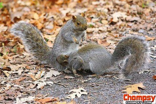 funny fighting squirrels 18