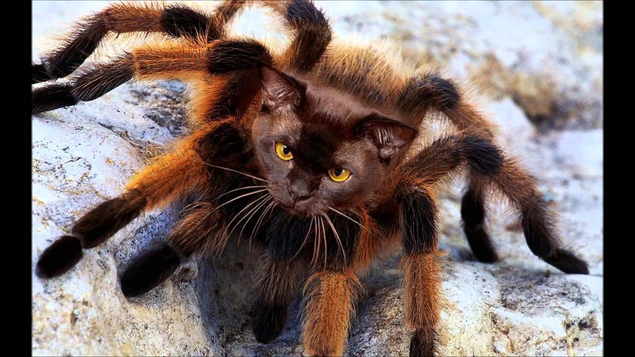 BETTER THAN MUTANT GIANT SPIDER DOG! MUTANT SPIDER CAT