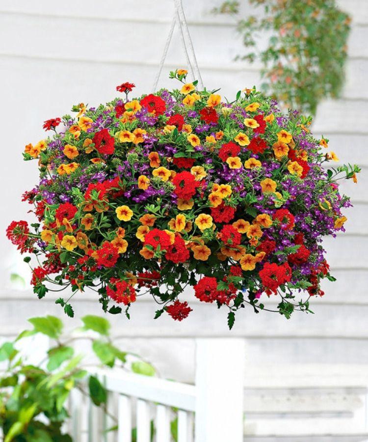 Crea un jard n resistente a las olas de calor for Plantas de jardin resistentes