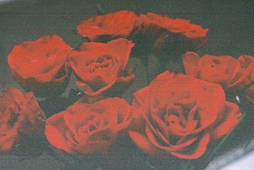 rosebig