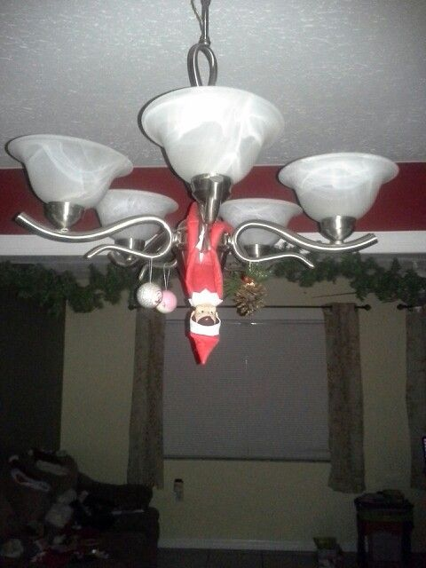 Day 6 - Quite the party last night.... he ended up hanging from the light fixtures.