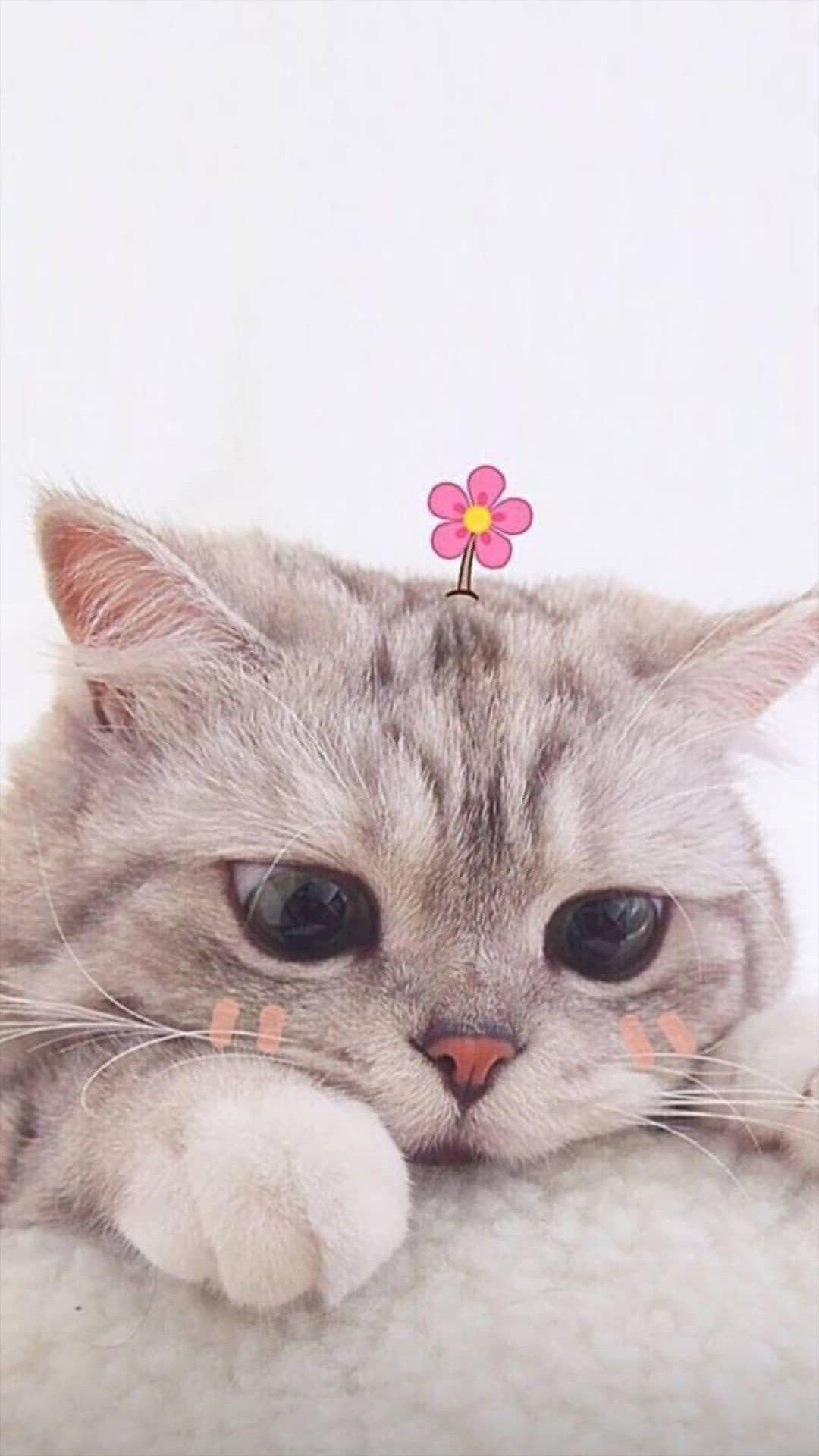 Wallpaper Kucing Cantik Gambar Anjing Lucu Fotografi Hewan