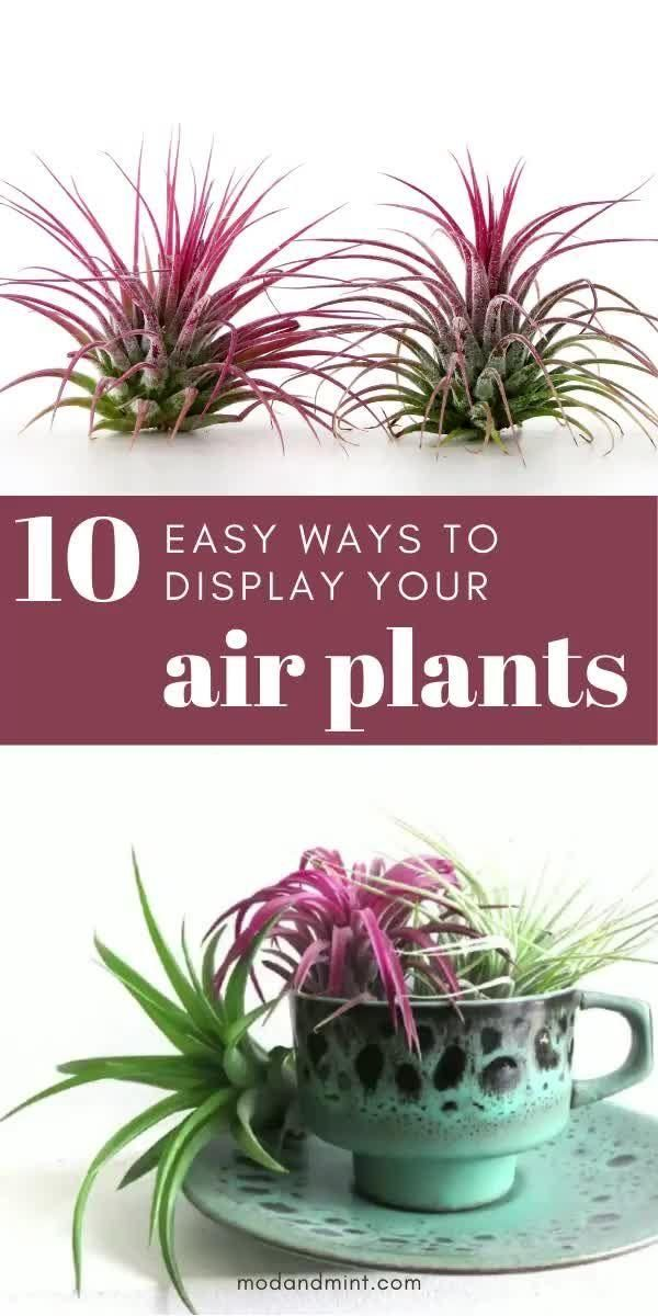 Photo of 10 Easy Air Plant Display Ideas