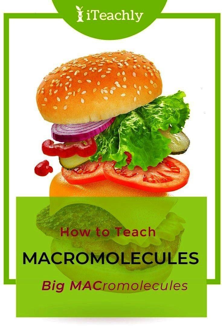 Science Teacher BIOLOGY LESSON - HIGH SCHOOL SCIENCE - SCIENCE - FREE BIOLOGY - TEACHER RESOURCES -