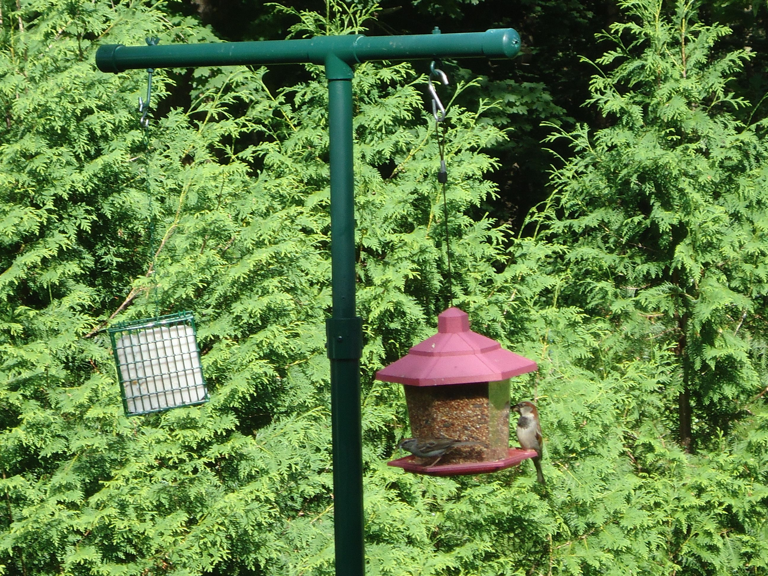 Pictures of a build it yourself pvc bird feeder pole for How to build a bird stand