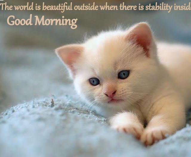 World S Top 50 Beautiful Cats Photos Gallery Beautiful Cats