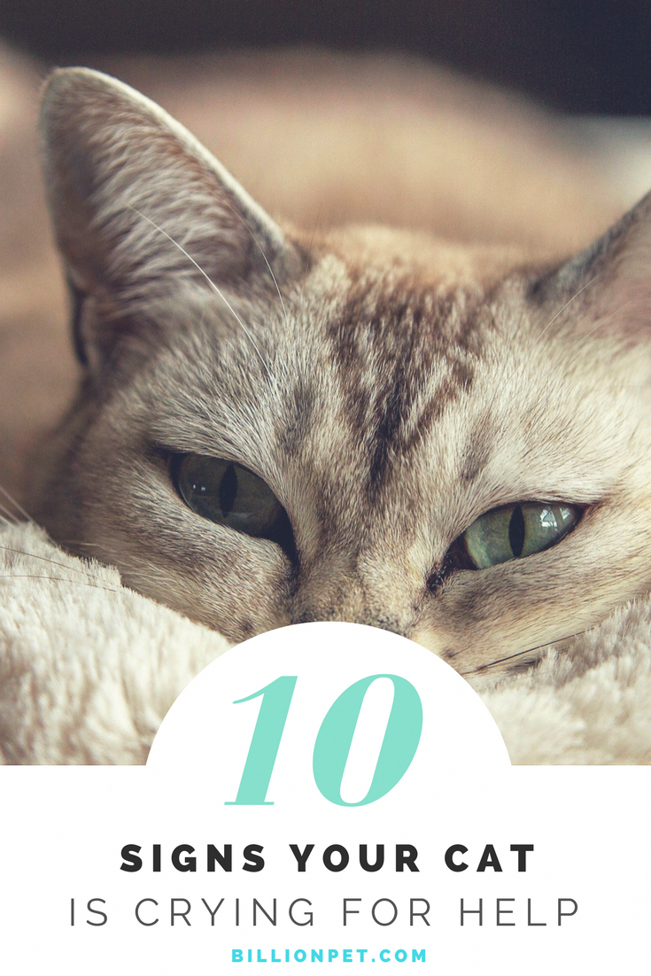 Decode Your Cat S Behavior 17 Things Your Cat Would Love To Tell You Cat Training Cat Care Cat Behavior