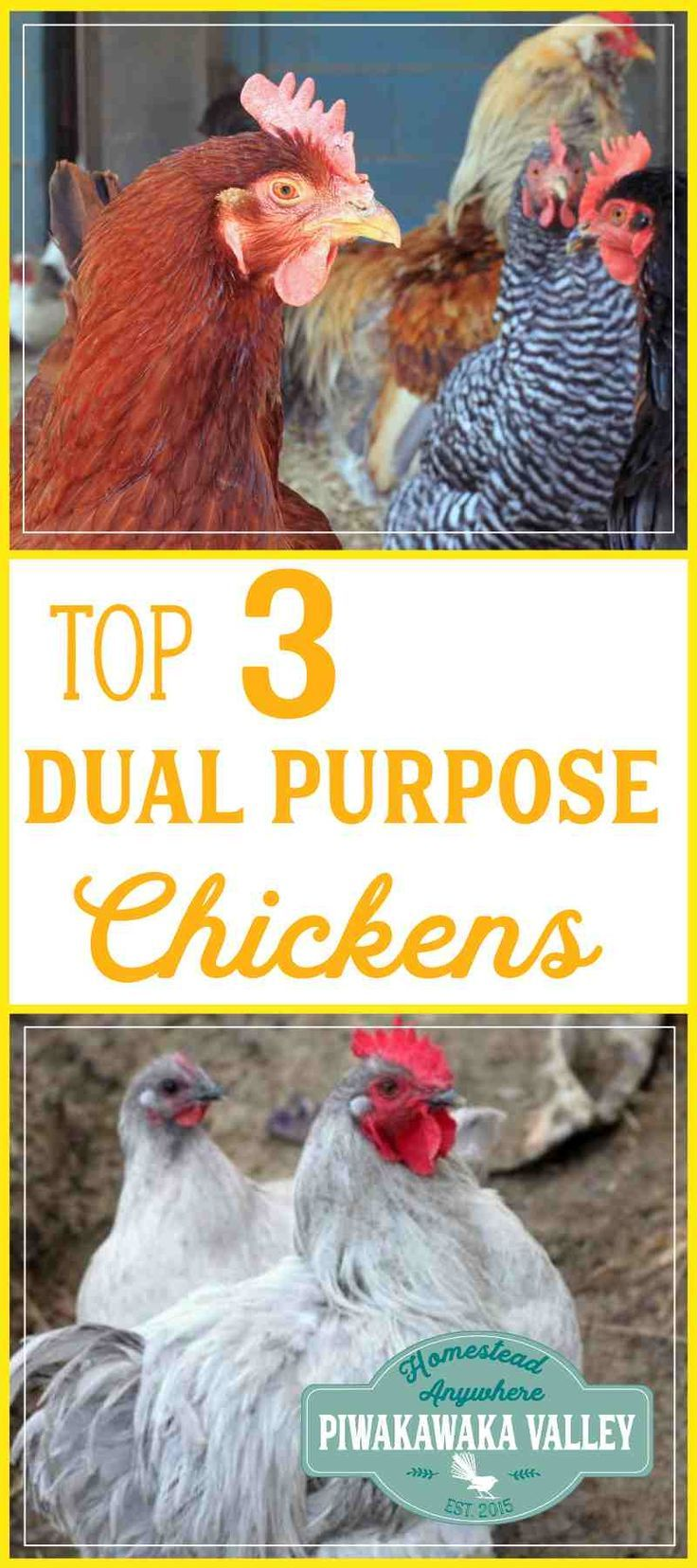 Top 3 Chicken Breeds For Your Homestead. Backyard FarmingBackyard ChickensKeeping  ...