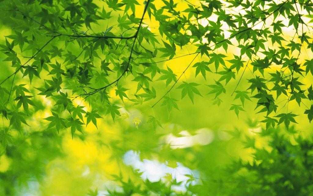 Nature Wallpaper Hd Download Green Nature Wallpaper Green Leaf Wallpaper Green Nature