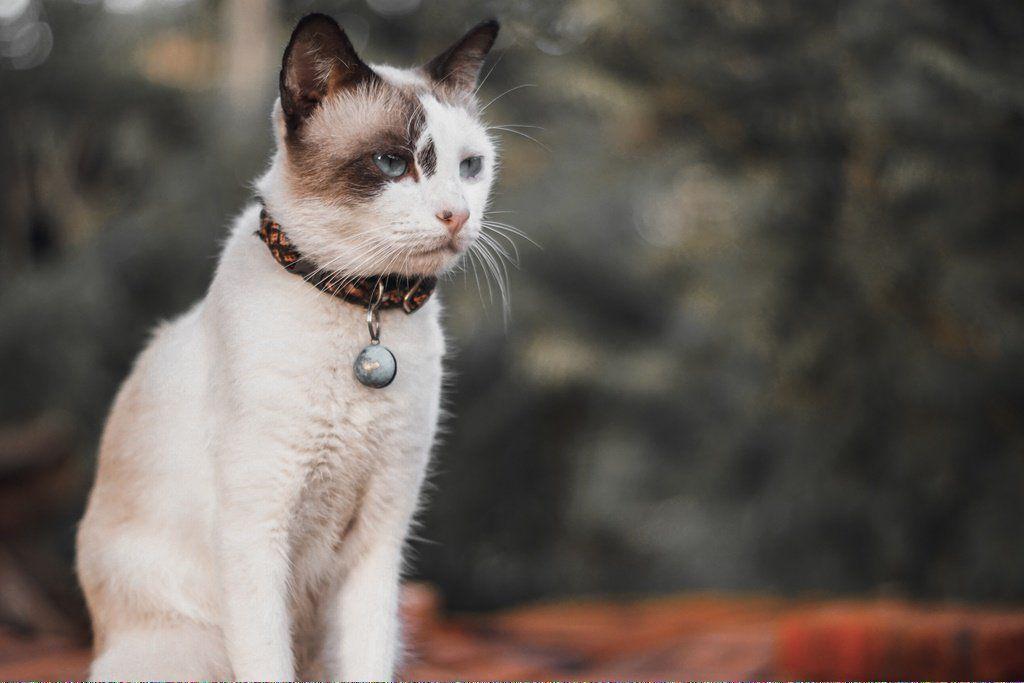 Cats Craigslist Catsincostumes Product Id 943972673 Cat