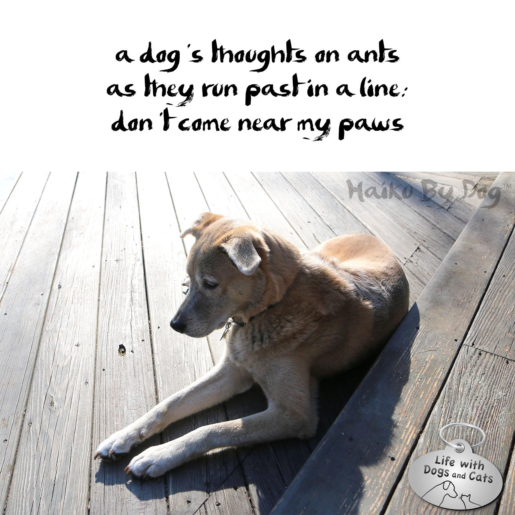 Haiku By Dog Ants Dog Cat Dogs Dog Poetry