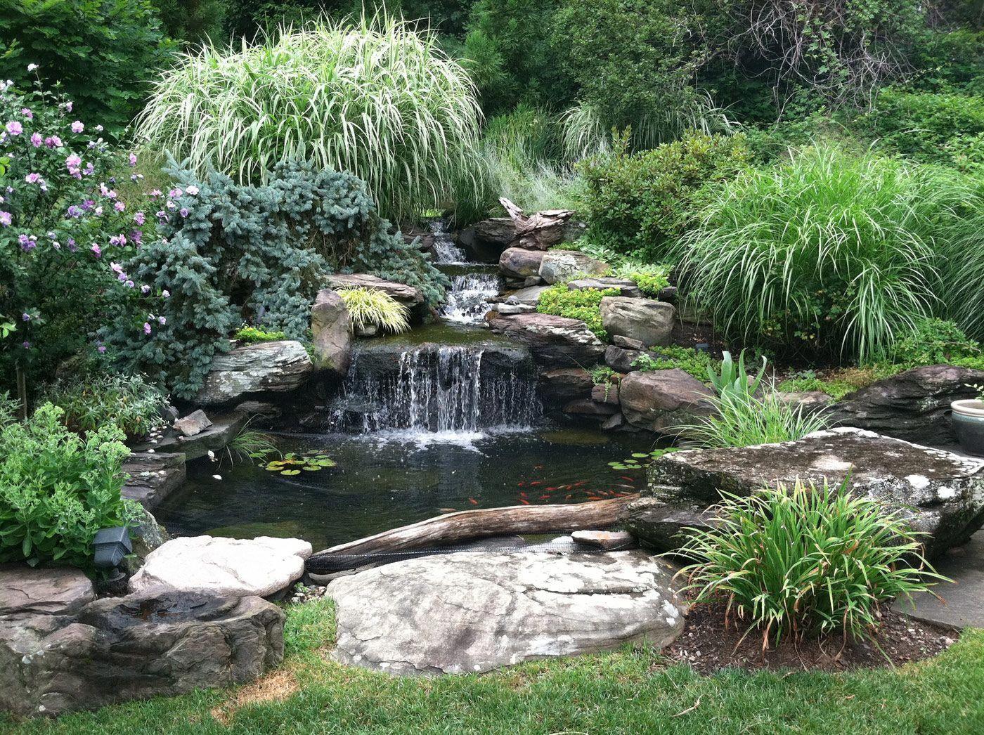 Pond Landscaping In New Jersey By Cording Landscape Design Estanques De Jardin Jardines Piscinas Naturales