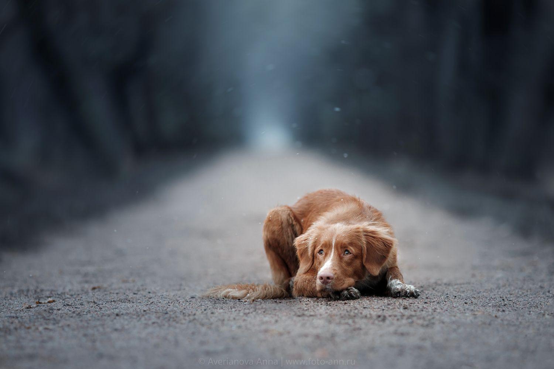 Обои грусть, Собака. Собаки foto 11