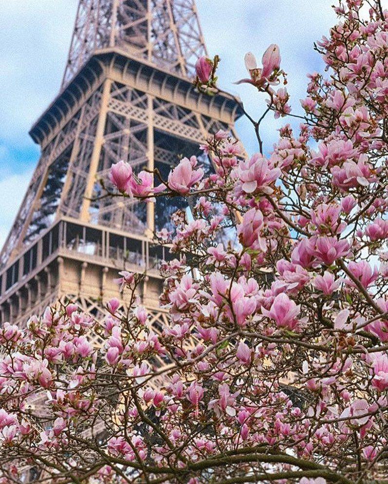 The Eifeltower In Paris On Springtime Eifeltower Eifelturm Paris Travel Traveller Spring France Paris Eiffelturm Hubsche Hintergrunde Eifelturm