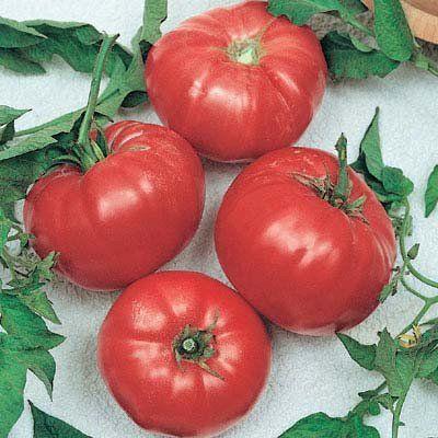 Tomato Brandywine Red Brandywine Tomato Growing 400 x 300
