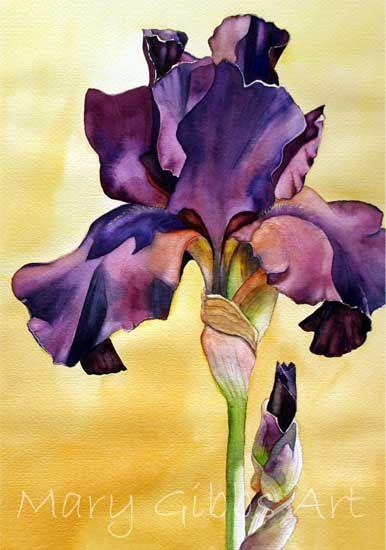 Flowers Maria Gibbs Arte Iris Painting Iris Art Floral Painting