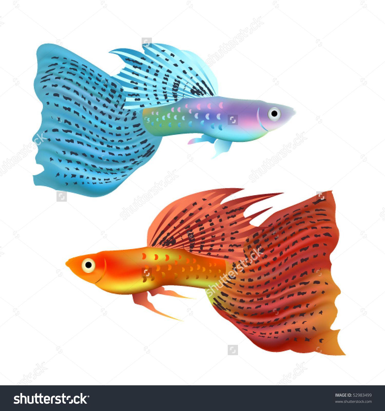 Golden Fish Stock Vectors & Vector Clip Art Shutterstock