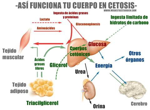 Por qué la cetosis causa micción frecuente?