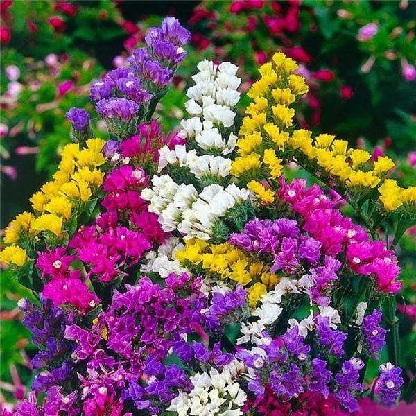 будь картинки многолетних уличных цветов процедуры животное оставляют