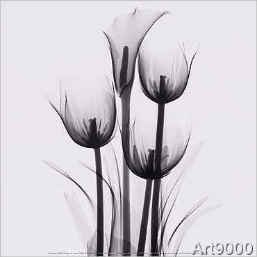 Marianne Haas - Tulips and arum lily