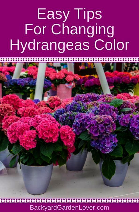 Gardening Tips For Containers After Gardening Top Tips Before Gardening Tips For May Hydrangea Colors Beautiful Flowers Garden Hydrangea Purple