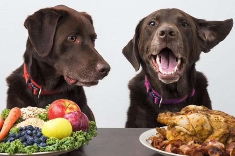 how to keep your food safe from animals
