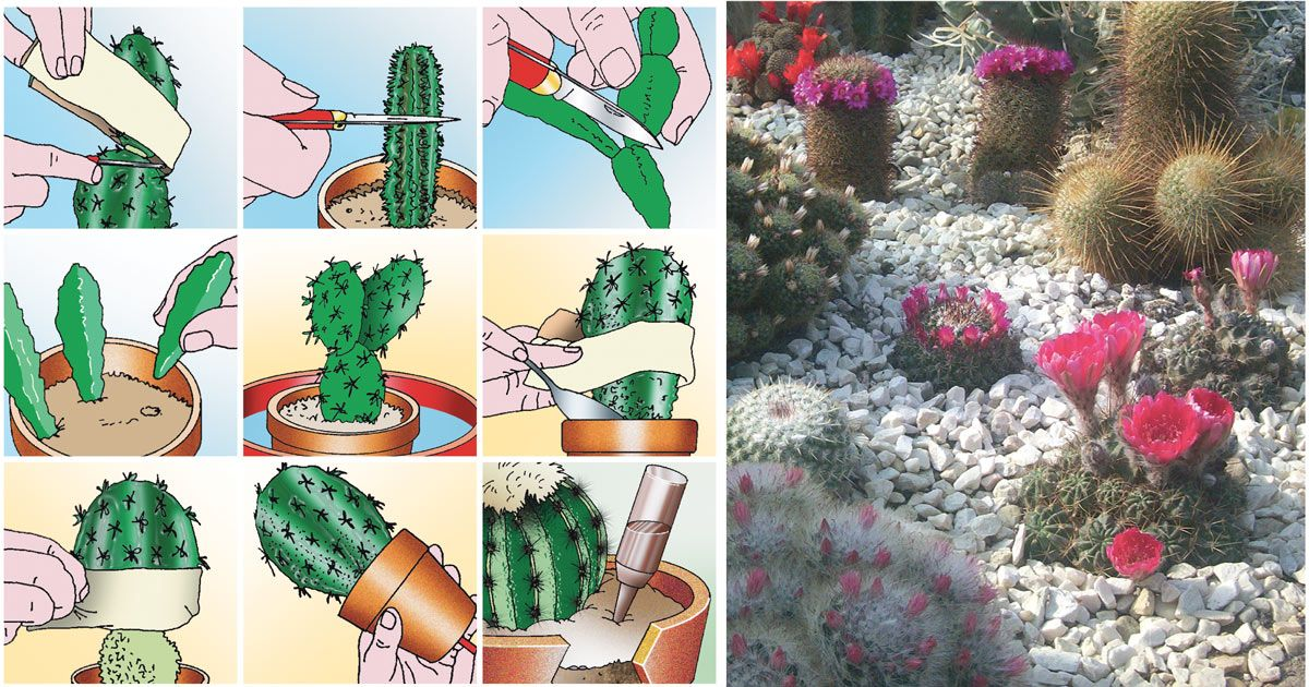Coltiva La Meglio Le Tua Piante Grasse Con Fiori Grazie A Questa Eccellente  Guida Illustrata Nei