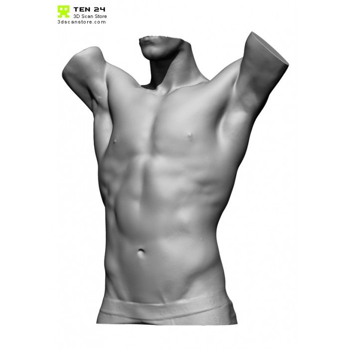 Male Torso Scan Bundle Anatomy Male Torso Anatomy Reference
