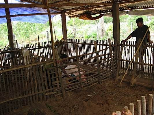 Pig Housing Design Pig Farming Pigs Farming Livestock Farm Design