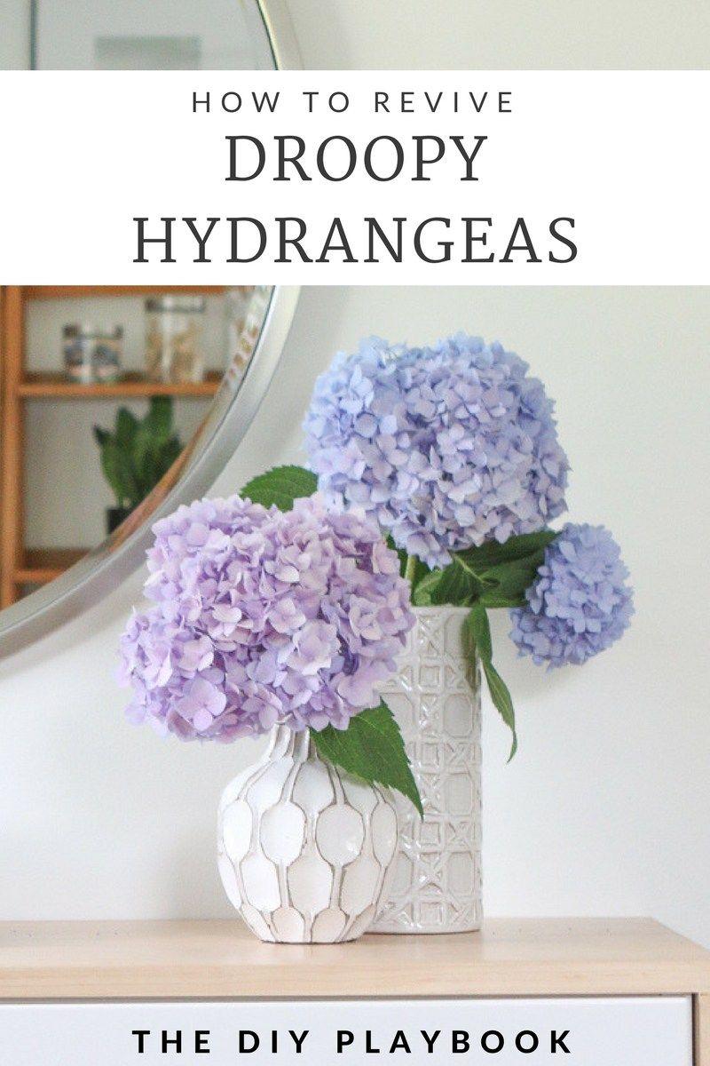 How to Revive Droopy Hydrangeas Hydrangea, Hydrangea