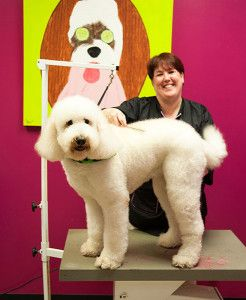 Dog Grooming In Houston And Katy Tx Rover Oaks Pet Resort Pet