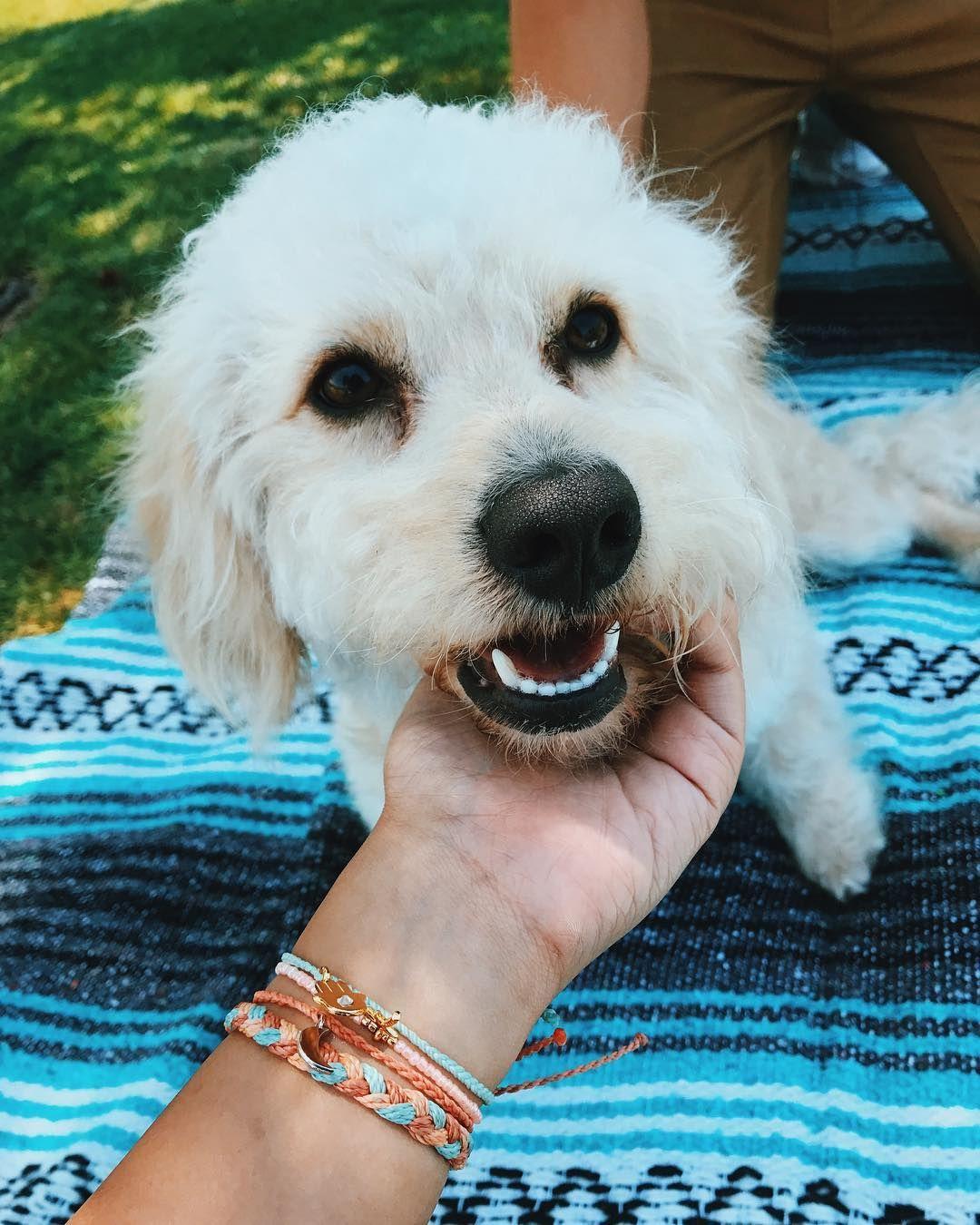 Puppy love x @instamaximax