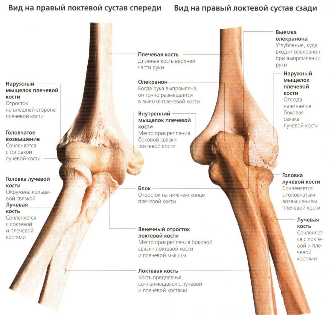 Мыщелок плечевого сустава противопоказания к протезированию коленных суставов