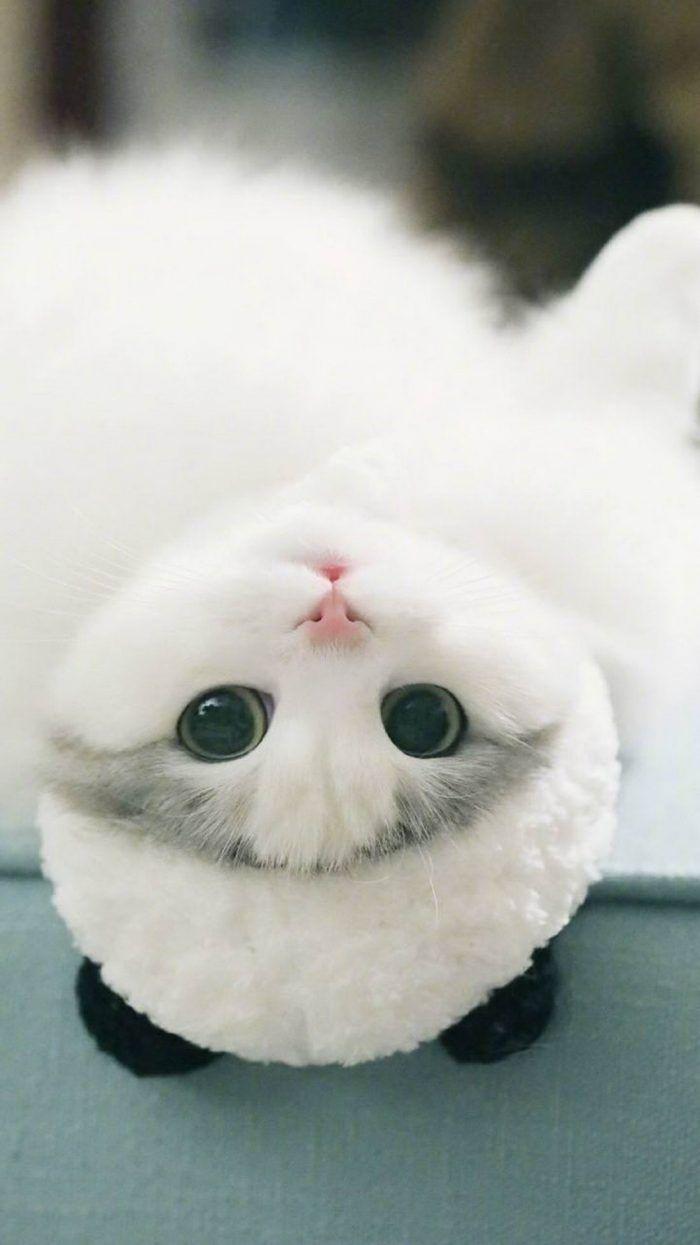 Cute Cute Cute Image By Ananya Talati Cute Baby Animals Cute Cats Kittens Cutest