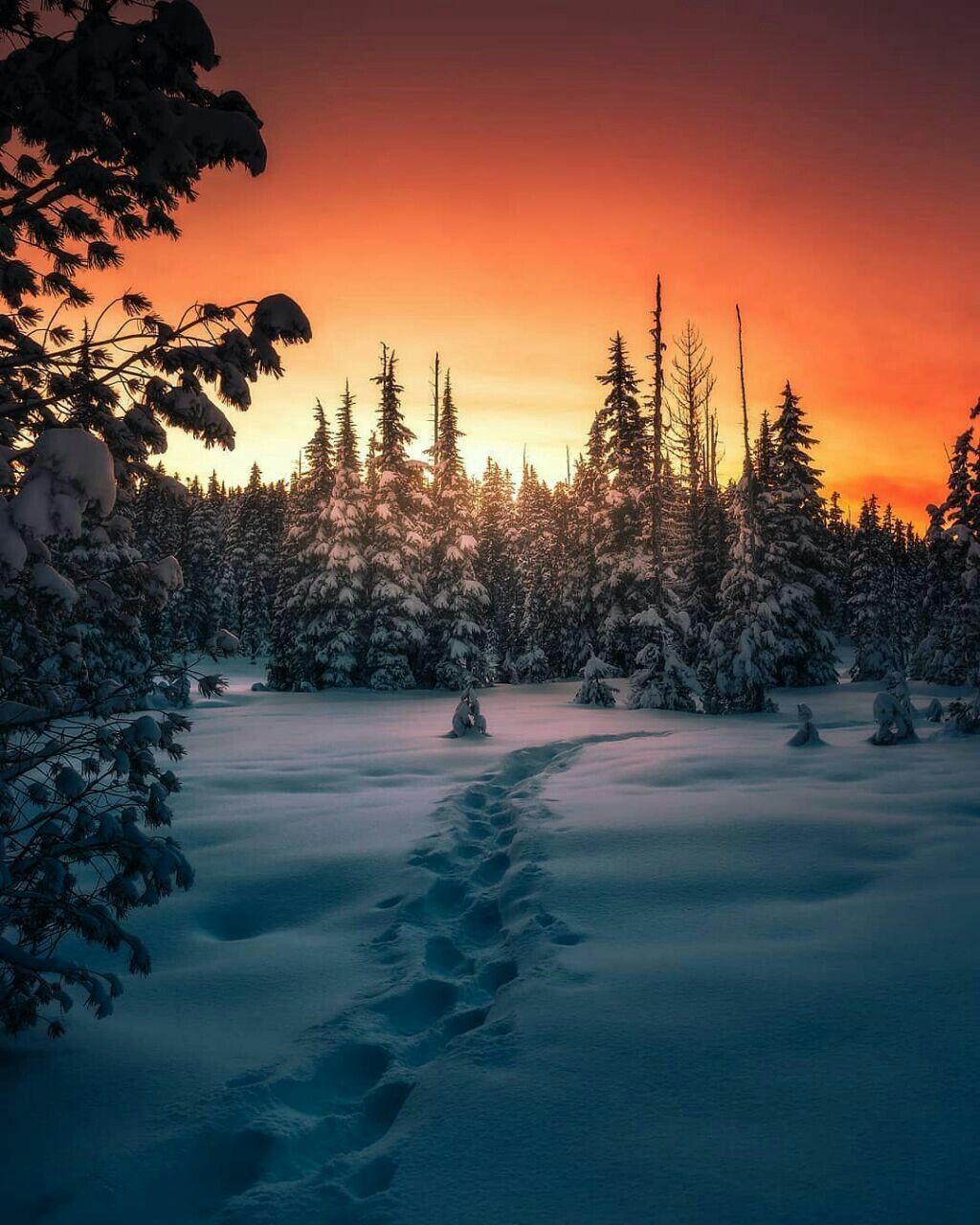 этих картинки зимний закат мерцающие жизнь хотел