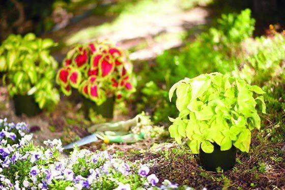 9+ Fabulous Shade Garden Ideas Zone 4 Ideas