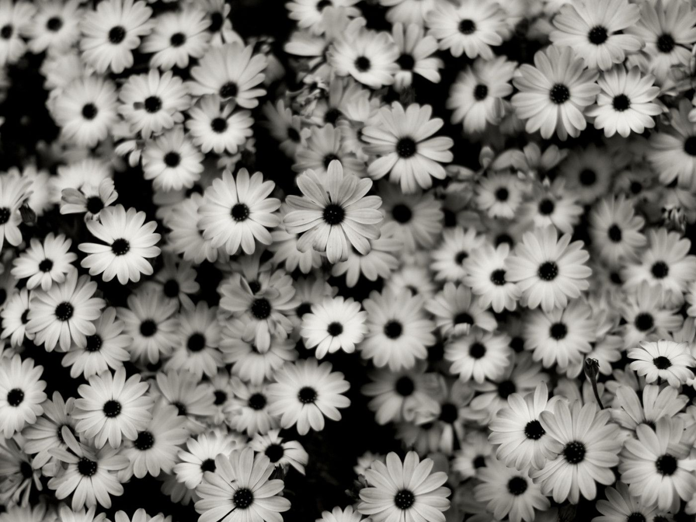 pictures of black and white flowers Google Search (With