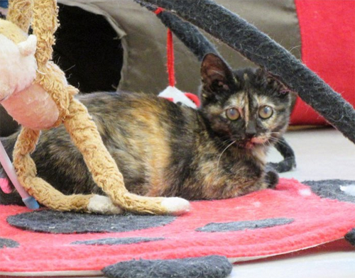Meet The Stunning Tortie Cat Who Has A Rare Eye Condition But Is Thriving Thanks To Her